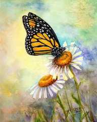 Monarch On Daisies watercolor by painting artist Carol May