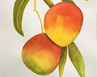 Glazing with watercolor, artist Carol May