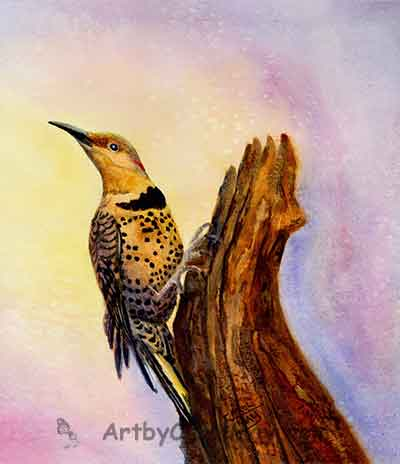 Northern Flicker lovely watercolor painting by Carol May