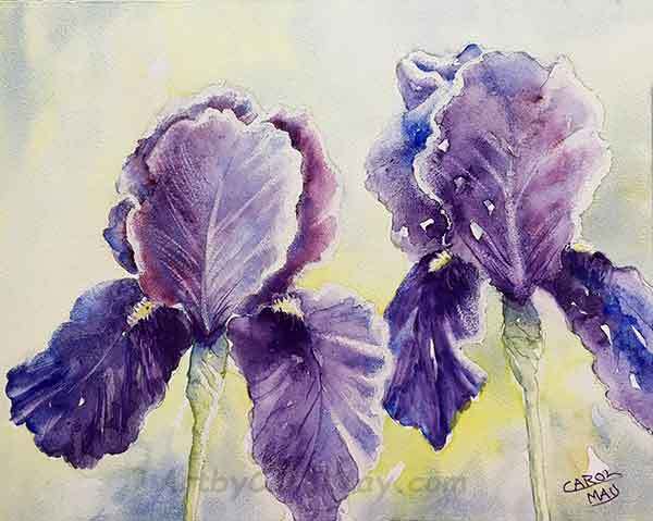watercolor painting of a beaded Purple Iris by Carol May