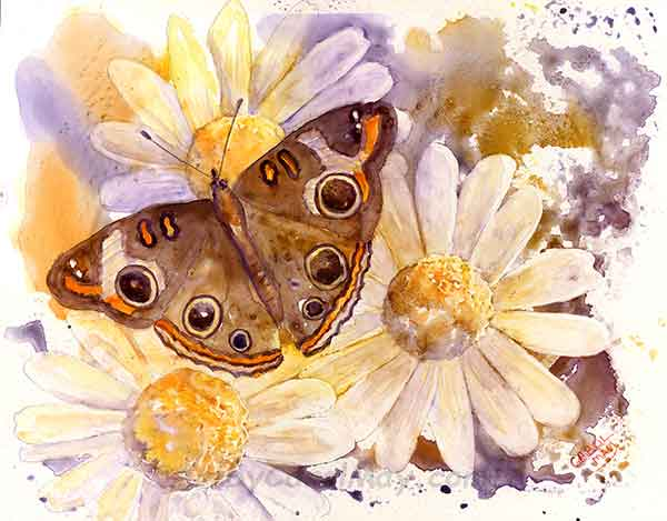 Buckeye Butterfly an originaly painting on Aquabord for sale by the artist Carol May