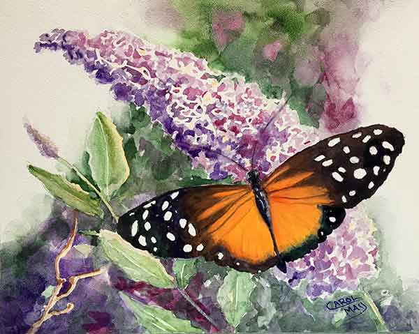 watercolor painting of a Longwing on Butterfly Bush by Carol May