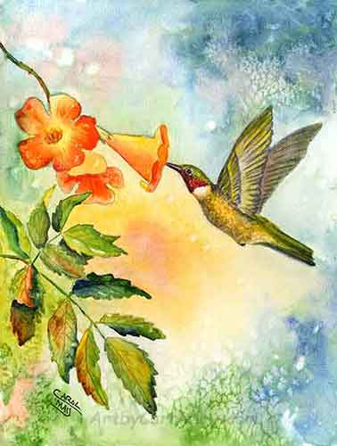 Ruby-throated Hummingbird watercolor by painting artist Carol May