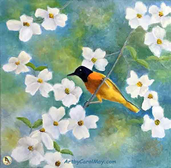 Learn how to do oil painting of an Oriole and Dogwood with painting artist Carol May