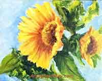 Sunflowers, a daily painting