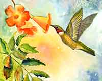 Ruby-throat Hummingbird original watercolor painting by artist Carol May
