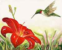 Ruby-throat Hummingbird and Daylily oil painting by Carol May