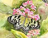 Butterfly Paintings by Carol May