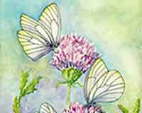 Painting Butterflies with artist Carol May