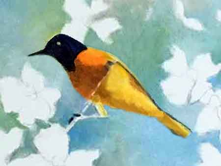 A close-up of painting the Baltimore Oriole with oils art by Carol May