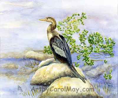 Watercolor painting of a Florida Anhinga on cold-pressed paper