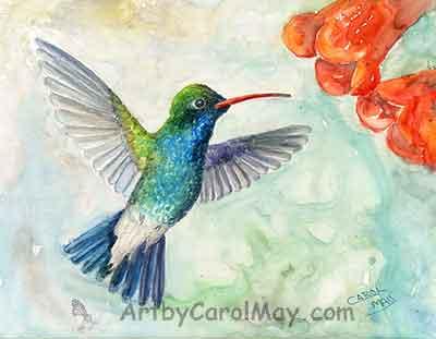 Broad-billed Hummingbird visiting a trumpet flower by artist Carol May