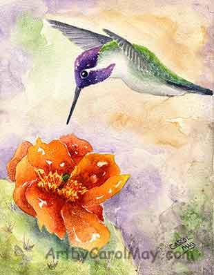 Costa's Hummingbird art by Carol May