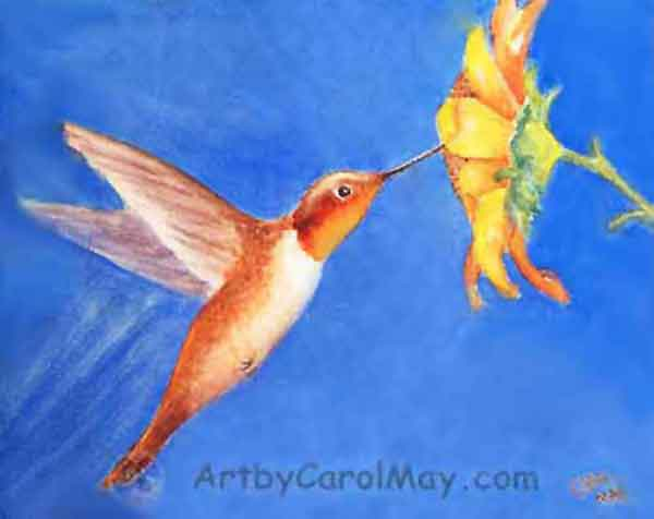 How to watercolor paint a Rufous Hummingbird visiting a daisy flower, art by Carol May
