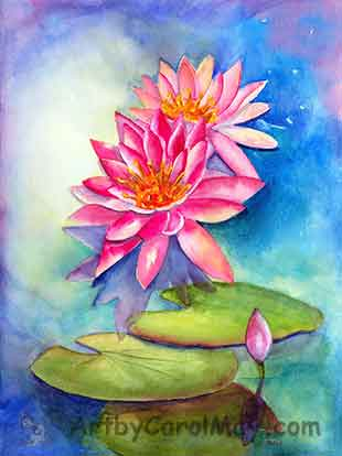 Pink waterlily flowers painted with watercolor by Carol May