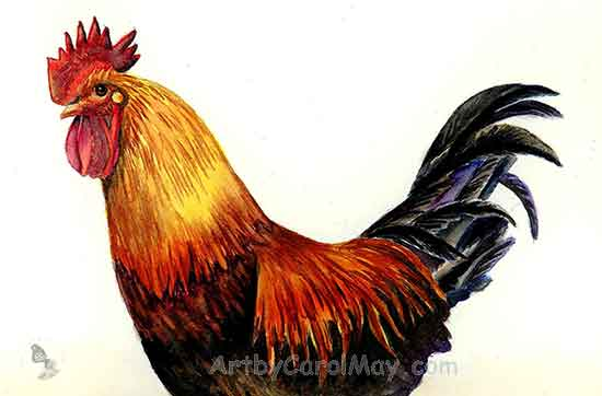 watercolor Rooster by the painting artist Carol May