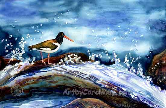 Surf Catcher a watercolor painting of a Florida Oyster Catcher