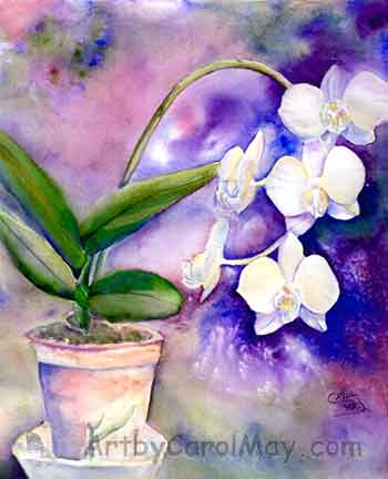 White Flight a watercolor flower painting of Phalaenopsis orchid flowers by artist Carol May