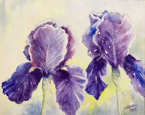 watercolor painting of Bearded Iris flowers by Carol May