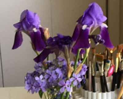 photo of Bearded Iris with phlox