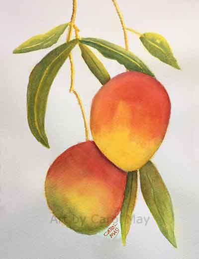 Learn glazing with watercolor as I paint some mangoes