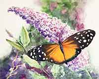 Longwing Butterfly watercolor painting for sale by artist Carol May