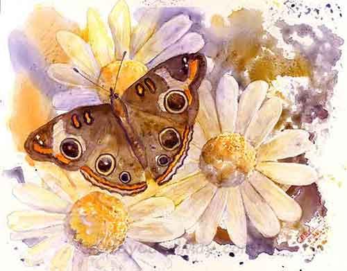 Buckeye Butterfly original art for sale by the artist Carol May