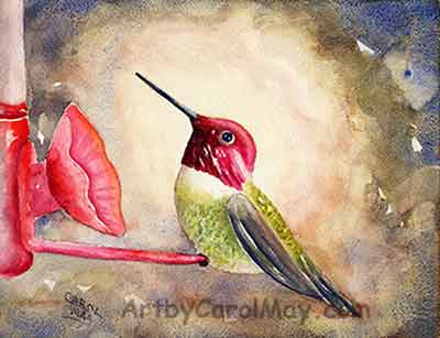 Anna's Hummingbird sitting a feeder, a watercolor painting by artist Carol May