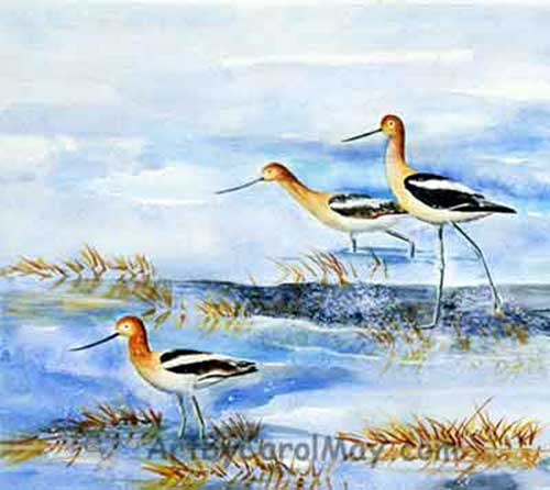 Watercolor painting of Avocet birds by artist Carol May