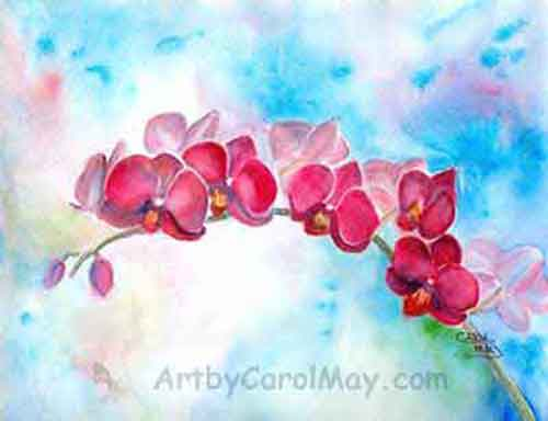 Doritenopsis orchid painting by Carol May