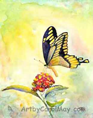 Giant Swallowtail Butterfly by Carol May